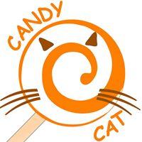 Студия Candy Cat